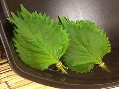 Perilla leaves  (DigiPub) Tags: leaf vegetable perilla       gettyimagesjapan12q4