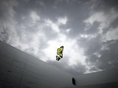 (akashirokiiro) Tags: museum museumofart aomori japan butterfly