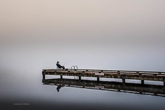 Waiting On Nobody (jeanmarie (been working lots of overtime)) Tags: jeanmarieshelton jeanmarie fog fishing fisherman mist haze morning dock pier reflections water waterscape landscape light lake man person minimalism minimal minimalistic white whitebackground
