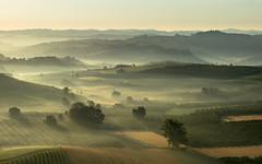 Misty sunrise in Verduno (CN) - Italy - Explored 9/12/16 (Attilio Piselli) Tags: roddi goldenhour unesco foggy langhe verduno sunrise mist italy sky piemonte landscape misty morning vineyard