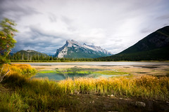 Day 5 - Vermillion Lakes (Siyuant) Tags: banff national park mount rundle vermillion lakes yellow reeds grass water