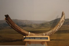 Tusk (demeeschter) Tags: canada yukon territory whitehorse beringia interpretive centre museum heritage archaeology palaeonthology history attraction science