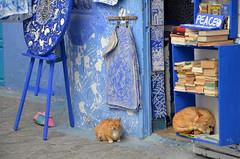 Asilah (6) (jim_skreech) Tags: asilah morocco