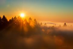 Sunrise at Mount Tamalpais State Park. (Alex T Sam) Tags: sunrise mount tamalpais state park