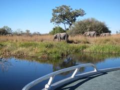 Chance Encounter (Mike Barish) Tags: elephant safari elephants botswana okavangodelta selinda selindacamp greatplainsconservation