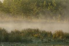 Morning moods (hknatuurfoto (Hans Koster)) Tags: mist netherlands fog duck moods ven eend morningsun stilte sferen maashorst hknatuurfotografienl hanskoster brobbelbiesnederland silenceochtendzon