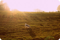 sunshadow (marlies.w) Tags: dog sun wiese hund sonne oldeffect