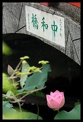 Beautiful flower,  (d-k-t) Tags: park trip travel canon eos contax sonnar 450d img7938 wunchuensinkoon contaxsonnar8528mmg mmghongkong