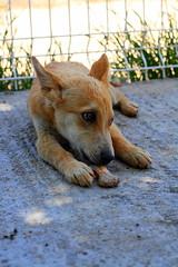 Foxy (Sabina Panayotova) Tags: dog pets dogs animal animals for sofia bulgaria rights shelter ngo adoption dogshelter
