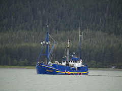 P7210816 (Gillfoto) Tags: fish water seine work boat fishing raw working lifestyle catch troll produce hook find bait rugged chum resource southeastalaska saltwater haulout fishery pullout trawl quota