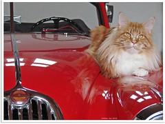 Katzentreffen - cat meeting (1)