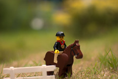 GB Equestrian Gold (Nick P Lee) Tags: horse proud lego photobook olympics goldmedal equestrian showjumping teamgb nicklee nikond40x klauseggs