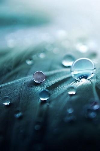 Drops-retina.jpg