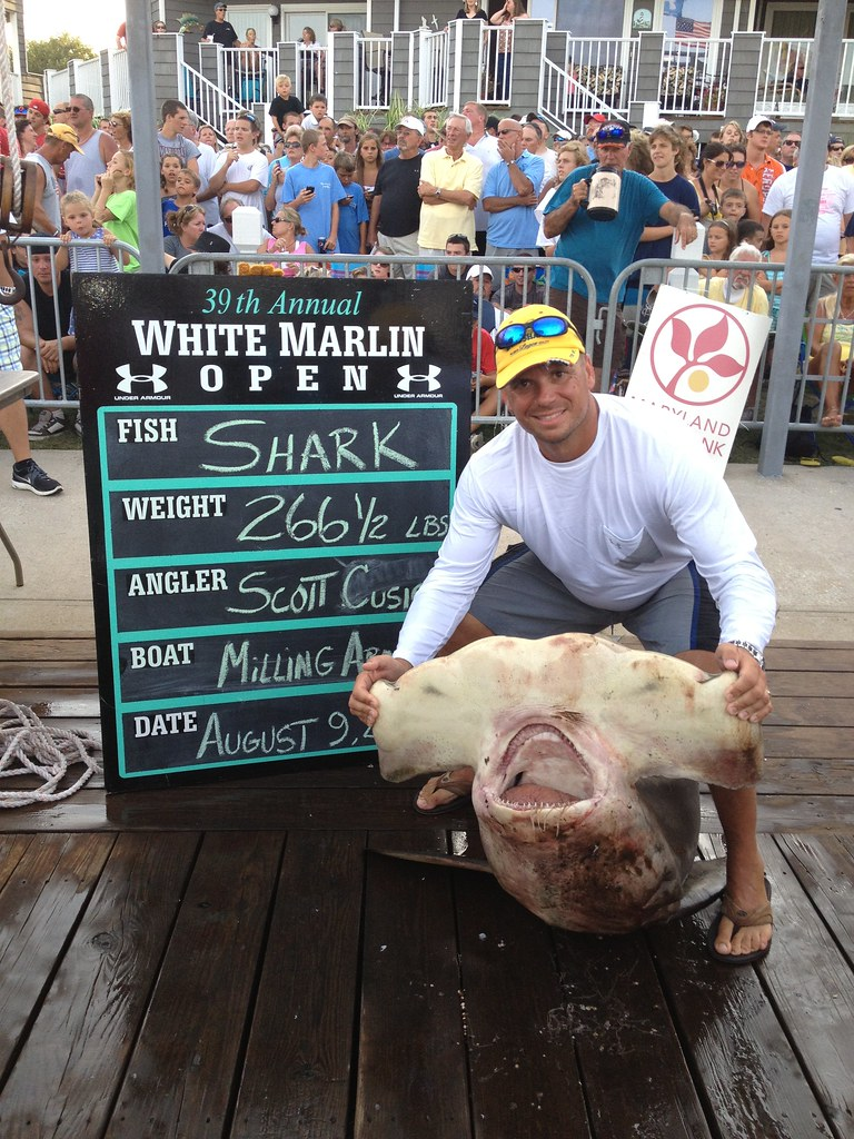 Scott Cusick - State Record Scalloped Hammerhead  2 - WMO 8-2012