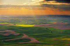 Sun Ray @ Palouse (Yan L Photography) Tags: sunset field washington spokane butte wheat fields sunray wheatfields palouse steptoe