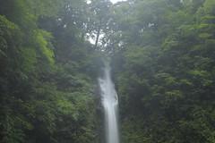 20120722 Amidagataki 7 (BONGURI) Tags: forest waterfall nikon falls  gifu      gujo  shiratori amidagataki   d3s  afszoomnikkor2470mmf28ged  nagataki amidagafalls amidagawaterfalls
