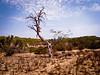 Tree, Gran Alacant (Joe Magowan) Tags: trees sun hot nature digital spain europe desert dry august alicante gran barren ricoh compact 2012 alacant gx100