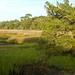 Clam Creek 16
