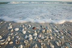 040509-169 (jenivievemae) Tags: ocean pink blue red sea brown white seascape beach water yellow seashells grey sand waves purple florida tide gray shoreline bubbles shore foam beaches sanibelcaptivaisland