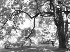 La main tendue de l'arbre.The outstretched hand of the tree (Amiela40) Tags: tree hand heart main coeur lumiere serene arbre calme repos tendre ombres intimity relation intimit tendue domainejoly abokehoflight outstrectched