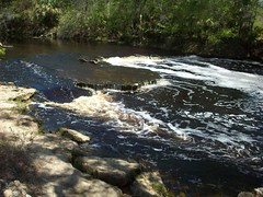 steinhatchee falls (Drivitlkustoleit) Tags: flickrandroidapp:filter=none