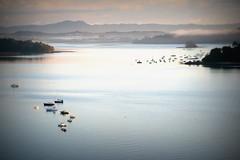 This morning (Titine) Tags: ocean mist water fog marina dawn harbour earlymorning yachts goldenhour millpond mahurangi