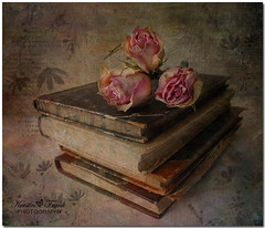 Three roses (Kerstin Frank art) Tags: roses texture photoshop books brushes oldbooks pinkroses threeroses magicunicornverybest