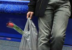 Rose du mtro (Pi-F) Tags: lyon mtro rose homme sac retour bleu rouge attente