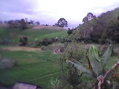 juma (gendutnaibaho) Tags: perkampungan
