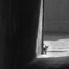 (kekyrex) Tags: cats felines gatti animals italy venice burano italiancats