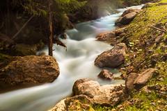 Bergbach (blumenandy) Tags: bayerischerwald gewsser grosserarbersee landschaft see