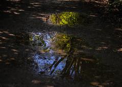 (hmxhm) Tags: aotearoa nature newzealand reflection wellington zealandia