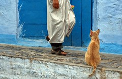 Chefchaouen Streets. (Photographing_The_World) Tags: morocco marokk travel travelphotography arabic africa muslimcountry culture wanderlust explore people northafrica moroccan moroccanculture moroccancolors moroccancolours moroccanpeople africanpeople discovermorocco exploremorocco marrakesh marrakech fes fez agadir asilah essaouira merzouga sahara maroc chefchaouen colors travelphotos arabicculture arabicpeople travelblog muslimpeople muslimculture diversity multicultural locals locallife moroccanlifestyle moroccanlife cat medina bluewall blueshades shades shadesofblue