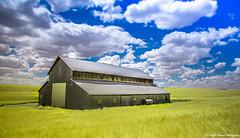 Heave on Earth (PrachiVerma) Tags: palouse green fields easternwashingtonfarmland washington wheatfields travel canoneos6d ef24105mmf4lisusm landscape sunny bluesky