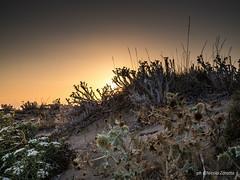 Tramonto ad Agosto (NIKOZAR (Nicola Zaratta)) Tags: mare sunset sea dune spiaggia puglia ialia campomarino olympusomdem10 olympusem10markii olympusm25mmf18 olympus tramonto