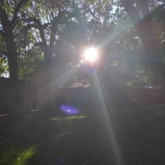 Rays Alight (wildseren) Tags: sun rays lensflare