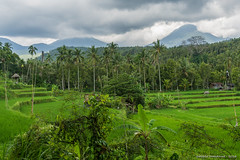 _DSC3946_Bali_09_16 (Saverio_Domanico) Tags: bali indonsie munduk voyage