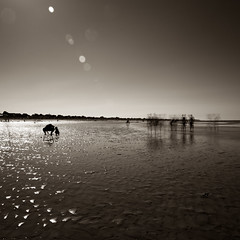 Like a dream (Zeeyolq Photography) Tags: beach blackandwhite dream ghost landscape monochrome normandie collevillemontgomery france