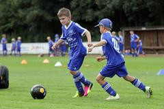 Feriencamp Pln 30.08.16 - b (8) (HSV-Fuballschule) Tags: hsv fussballschule feriencamp pln vom 2908 bis 02092016