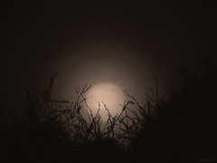 signs of spring (1) (birdcloud1) Tags: moon luna night dark amandakeoghphotography amandakeogh birdcloud1 canonsx60hs sx60hs nest spring signsofspring kowhai alwaysamoon aotearoa