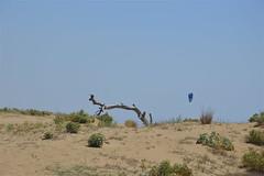 Strana forma di un vecchio tronco (costagar51) Tags: marinelladiselinunte castelvetrano trapani sicilia sicily italia italy anticando