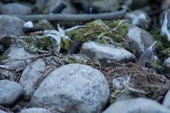 16_09_25_Herbst am Bodensee-2.jpg (werwen01) Tags: morgenstunde jahreszeit friedrichshafen orte bodensee herbst ereignisse ostufer