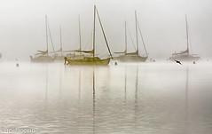Dense Fog (roel rocero) Tags: mendota wisconsin middleton lake fog