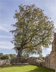 Bayham Abbey 33 (mini-b) Tags: bayhamabbey ruins englishheritage 13th15thcentury frant eastsussex canon eos5dmkii ef28300mm3556lisusm 2016