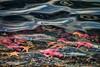 Water Spirit (Peggy Collins) Tags: ocean canada reflection water face underwater starfish britishcolumbia sealife pacificnorthwest mussels sunshinecoast underthesea oceanlife waterspirit purplestarfish oceananimals peggycollins