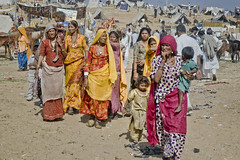The Grim Reality (Anoop Negi) Tags: horse india colour photography photo cattle creative culture fair camel pushkar anoop rajasthan negi
