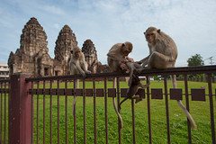Temple of Monkeys: Phra Prang Sam Yod #3 (thai-on) Tags: family sky nature animal fence thailand temple monkey nikon creature d3 lopburi totallythailand
