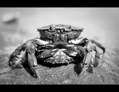 Crab at Crosby Beach (almaarte II) Tags: inglaterra wild summer england bw sun blancoynegro sol beach nature digital liverpool eyes sand shine crab naturallight playa olympus bn arena ojos verano mirada gaze crosby tweezers cangrejo pinzas salvaje luznatural specanimal flickraward marconatural luzdeambiente highqualityanimals