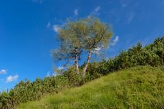 Pot na isti vrh (happy.apple) Tags: landscape geotagged slovenia slovenija julianalps julijskealpe severnaprimorska istivrh