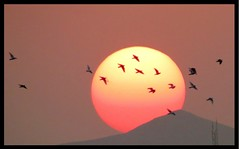 In memory of ... (Ebrahim Baraz) Tags: sunset birds   baraz  ebrahimbaraz